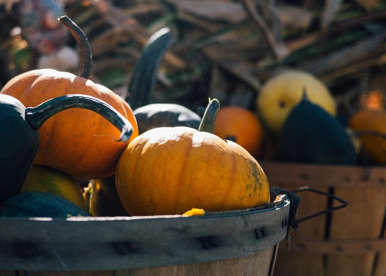 Halloween Twilight Market